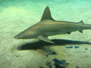 歯型のついた鮫